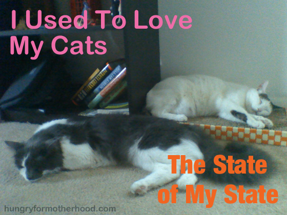 I Used to Love My Cats- The State of My State