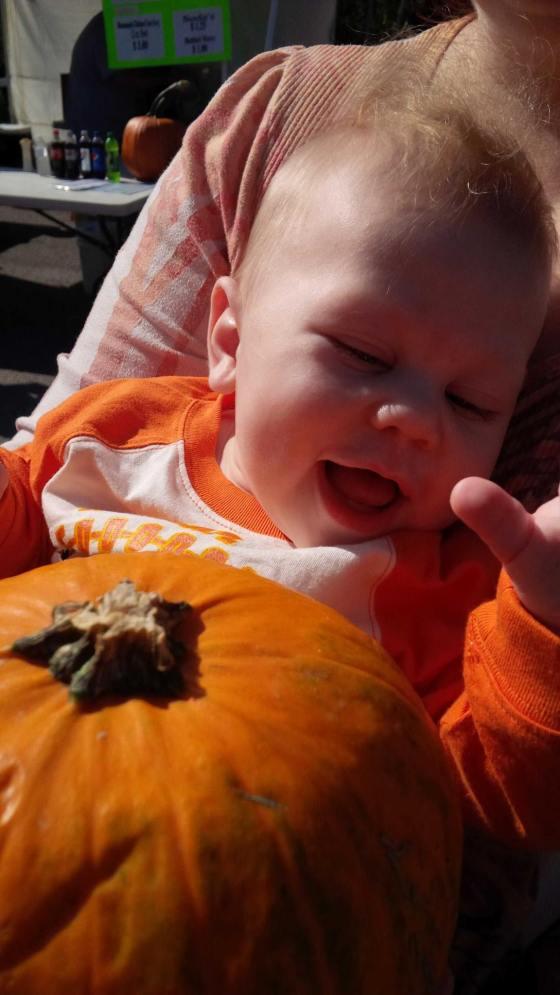 Gibs Pumpkin Baughers